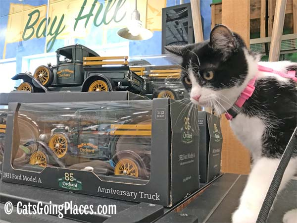 black and white tuxedo kitten next to orchard supply hardware toy truck