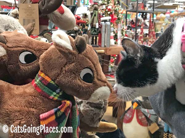 black and white tuxedo kitten touches noses with stuffed reindeer