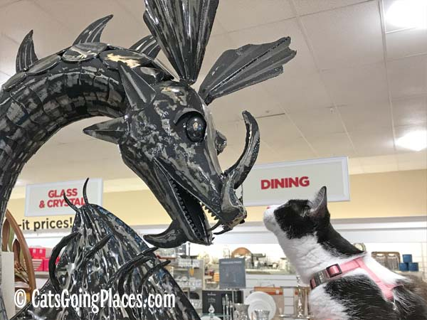 black and white tuxedo kitten looks at dragon