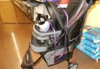 black and white tuxedo kitten in stroller