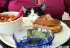 black and white tuxedo kitten peeks onto plate at dining table