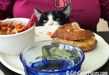 black and white tuxedo kitten peeks onto plate at dining table