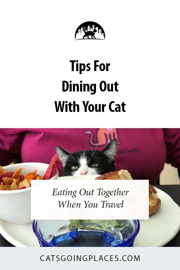 Tips for Dining Out with Your Cat - You can eat out togheter when you travel #cats #travel #dining