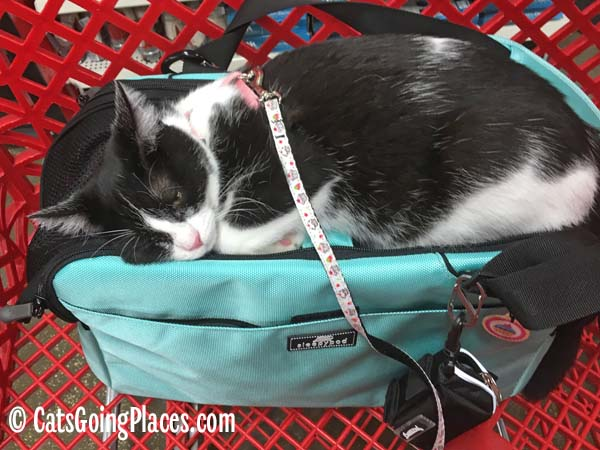 black and white tuxedo kitten naps on top of carrier in shopping cart