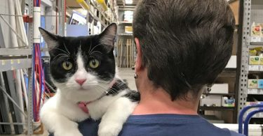 black and white tuxedo cat rests paws on human's shoulder