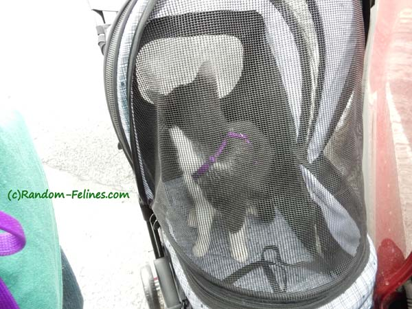 black and white tuxedo cat inside zipped closed carrier