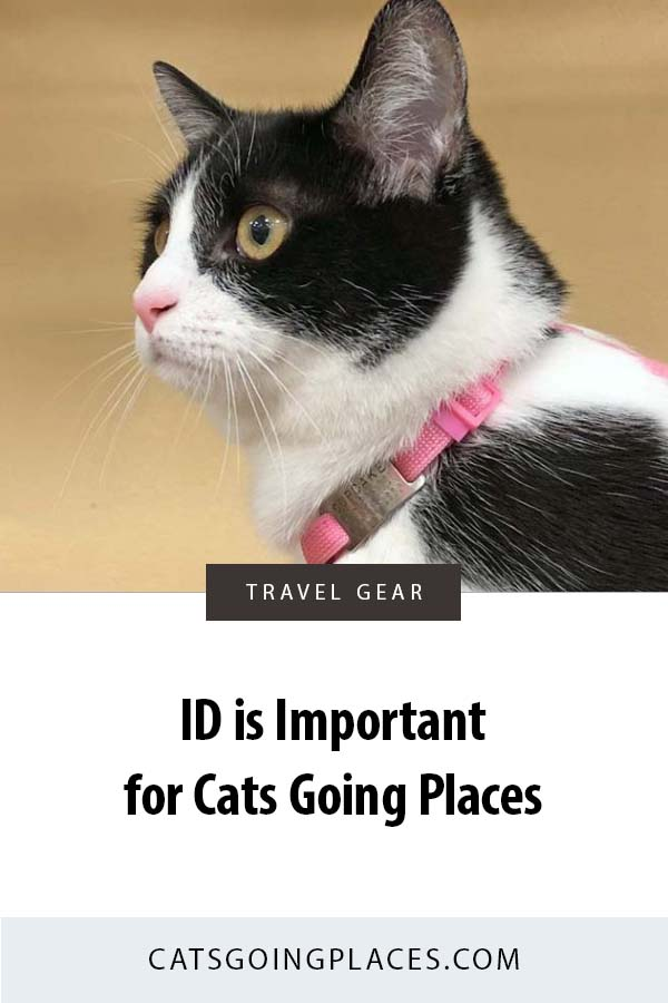 ID is important for cats going places. #cat #travel #safety