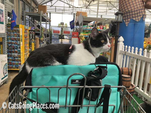 black and white tuxedo kitten rides atop Sleepypod Atom