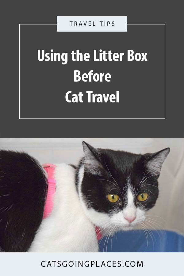 "Using the Litter Box Before Cat Travel - Have you ever wished your cat would ""go"" before you leave? You can teach her! #cats #travel"