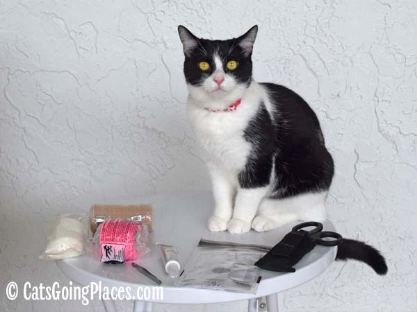 black and white tuxedo cat with contents of first aid kit
