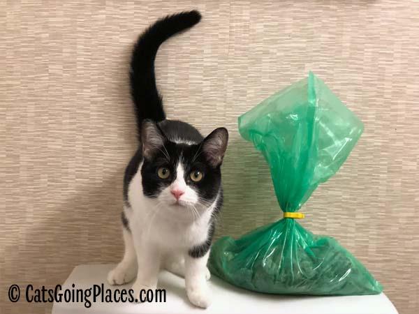 black and white tuxedo cat next to green bag