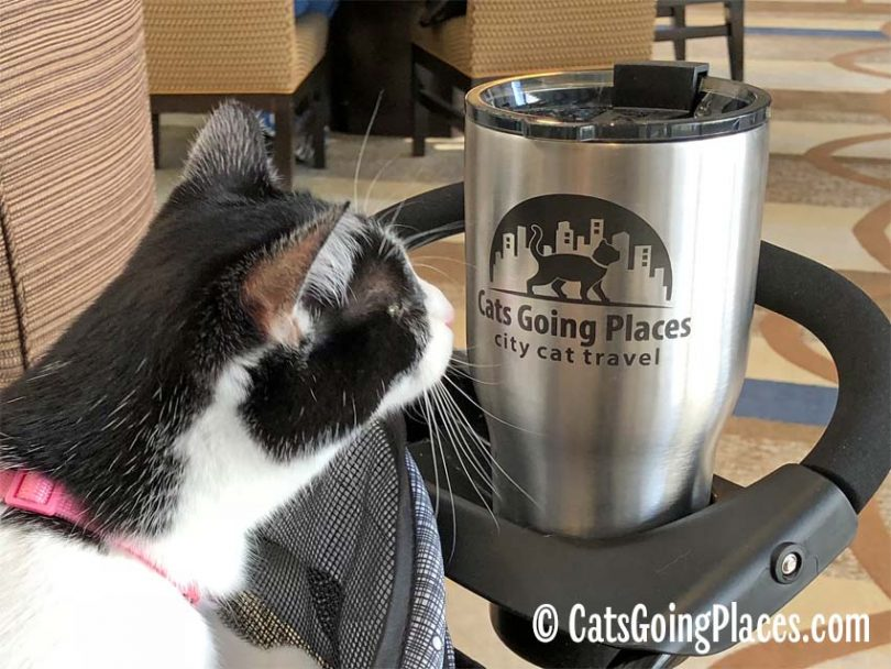 5 tips for staying in a hotel with your cat cats going places
