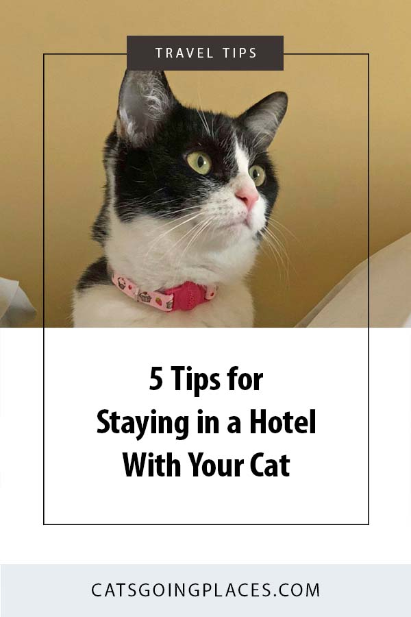 5 Tips for Staying in a Hotel With Your Cat - When you travel with your cat, you have to stay somewhere. Get tips for making your hotel stay comfortable for you and your cat. #travel #cats