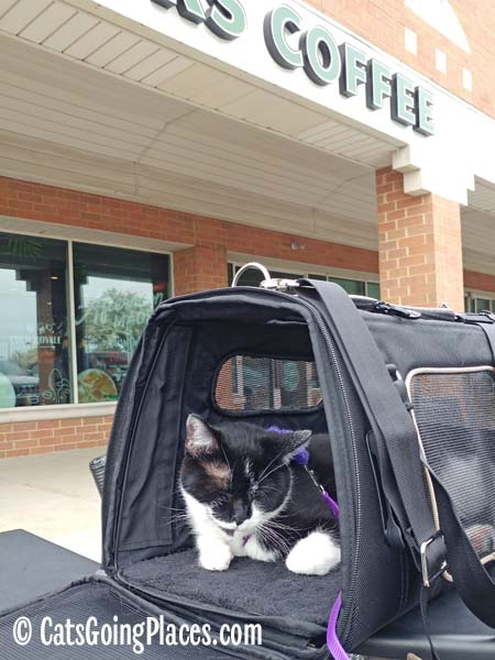 black and white tuxedo cat hangs out in carrier outside coffee shop
