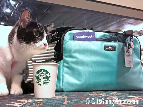 black and white tuxedo next to Sleepypod and Starbucks cup in airport gate area