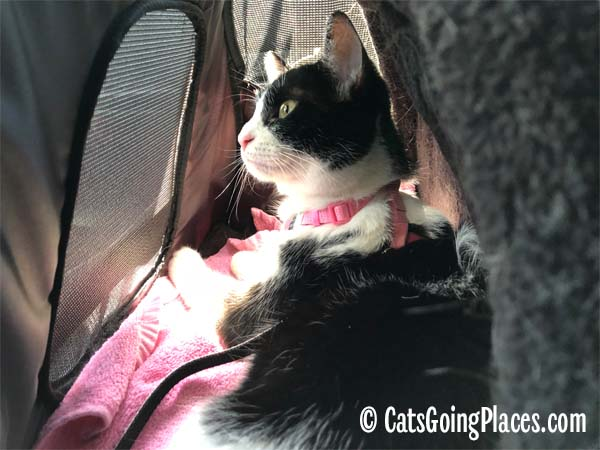black and white tuxedo cat in Gen7Pets Carry-Me Sleeper Carrier