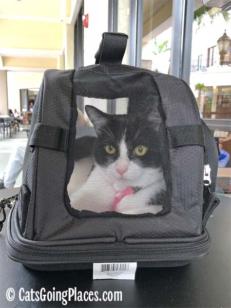 black and white tuxedo cat inside Sherpa comfort ride carrier