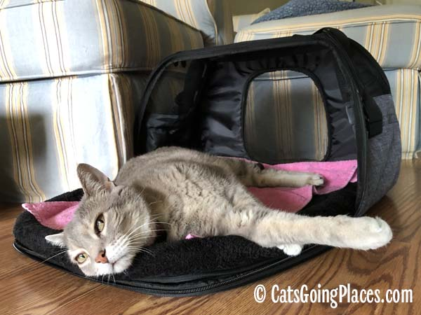 gray tabby cat lounges in Gen7Pets Carry-Me Sleeper Carrier
