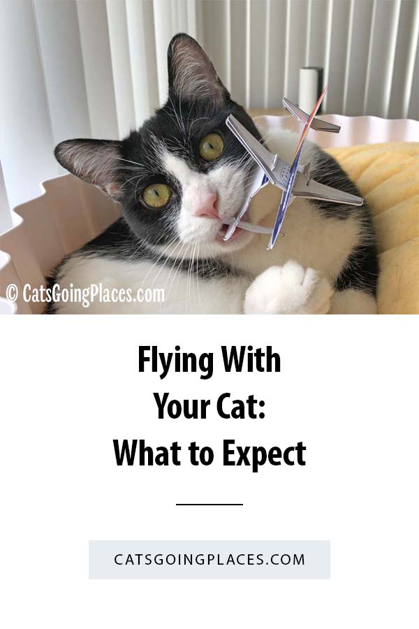 Flying With Your Cat: What to Expect --- Everything you need to know about flying with your cat, from check-in to boarding to landing. #Travel