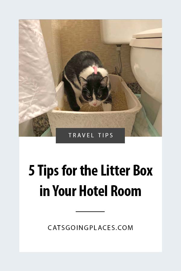 5 Tips for a Litter Box in Your Hotel Room - When you travel with a cat, a litter box in your hotel room is necessary, but there are ways to make it easier! #travel #cats