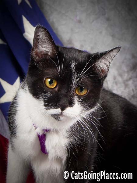 black and white tuxedo cat in front of stars and stripes