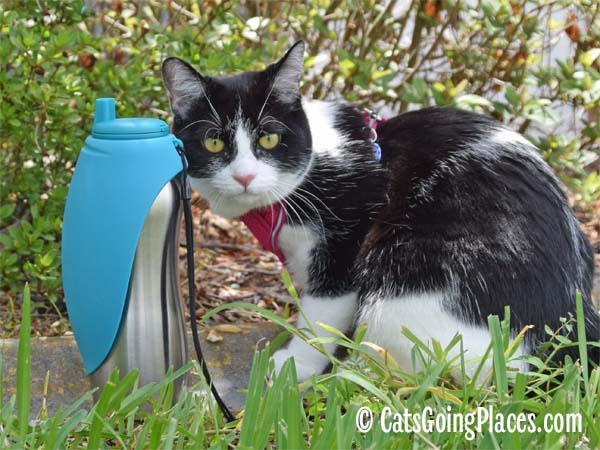 black and white tuxedo cat with Messy Mutts Stainless Steel Travel Water Bottle with Oversized Silicone Flip-up Bowl