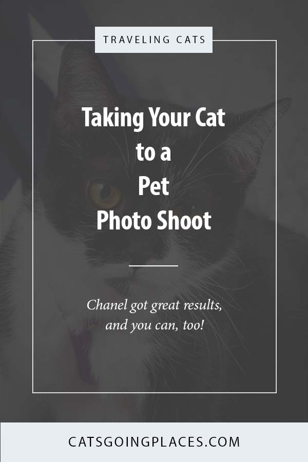 Taking your cat to a pet photo shoot. Chanel just sat for her second professional photo shoot, and it was a great success. Practice makes perfect! #cat #photos