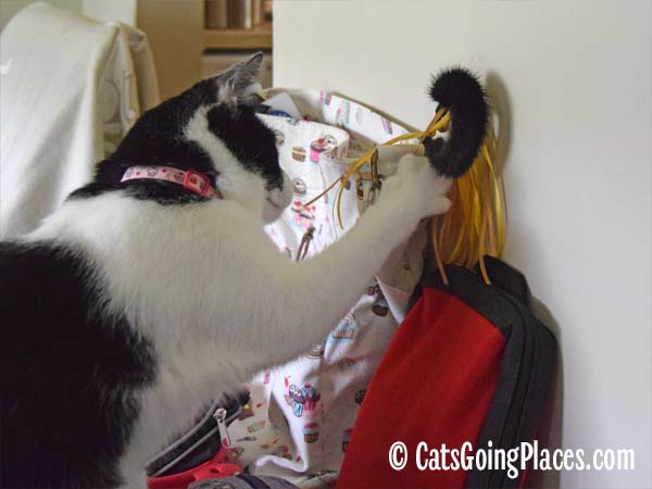 black and white tuxedo cat steals a toy from her bag