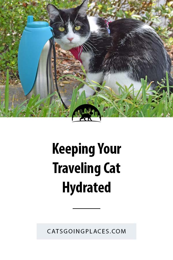 It's important to keep your cat hydrated during warm-weather outings. The MessyMutts silicone collapsible dog bowl and stainless steel travel water bottle with folding bowl can help make sure your cat gets water on the go. #cat #travel #hydration #sponsored