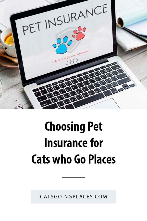 Choosing Pet Insurance for a Cats who Go Places - There can be a bewildering number of choices in pet insurnace. This is how we narrowed it down for our cat who goes places, and the ones who stay home, too. #cats #petinsurance