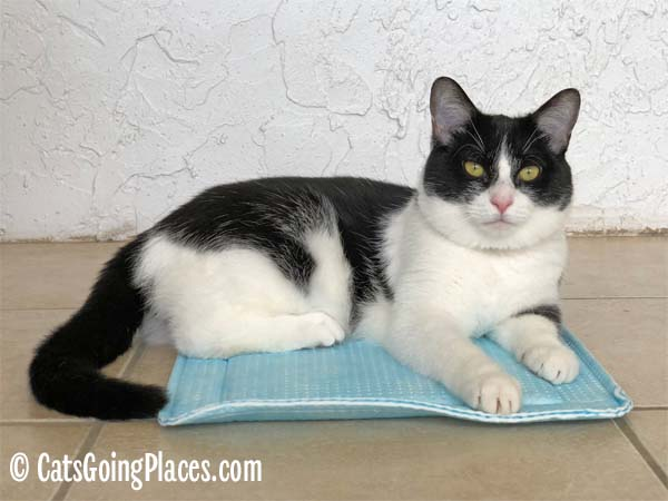 black and white tuxedo cat sits on Dry Fur kennel pad