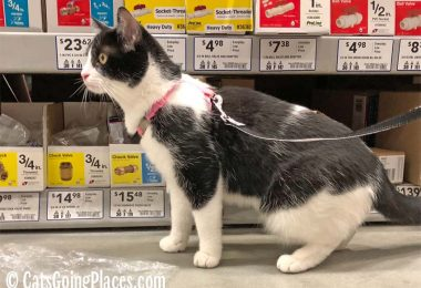 black and white tuxedo cat in Lowe's home improvement store aisle