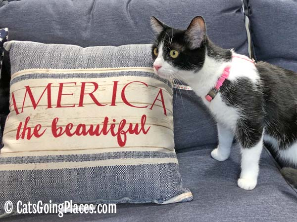 black and white tuxedo cat with america the beautiful pillow