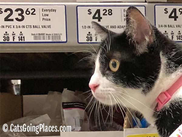 black and white tuxedo cat closeup in home improvement store aisle