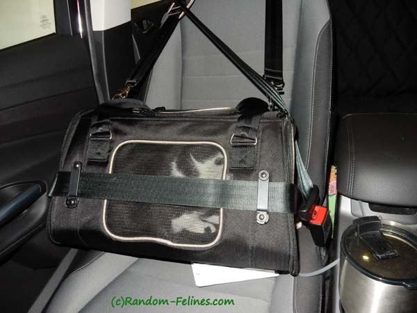 Gen7 Commuter carrier buckled securely into car