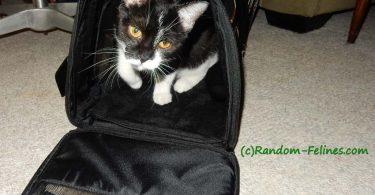 black and white tuxedo cat in Gen7 Commuter carrier