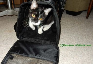 black and white tuxedo cat in Gen7 Commuter carrier