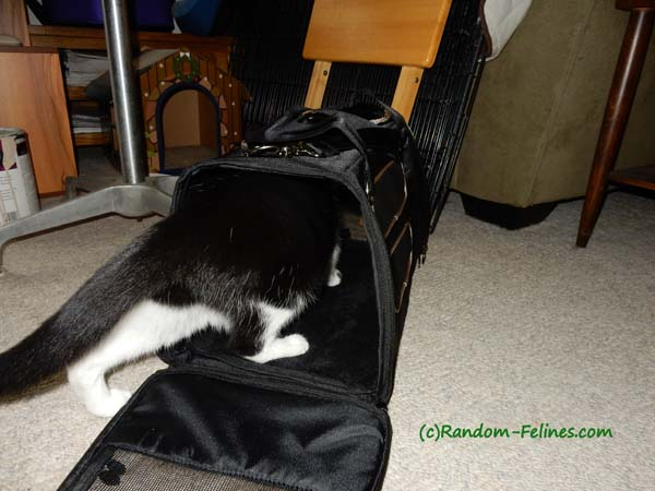 black and white tuxedo cat enters Gen7 Commuter Carrier