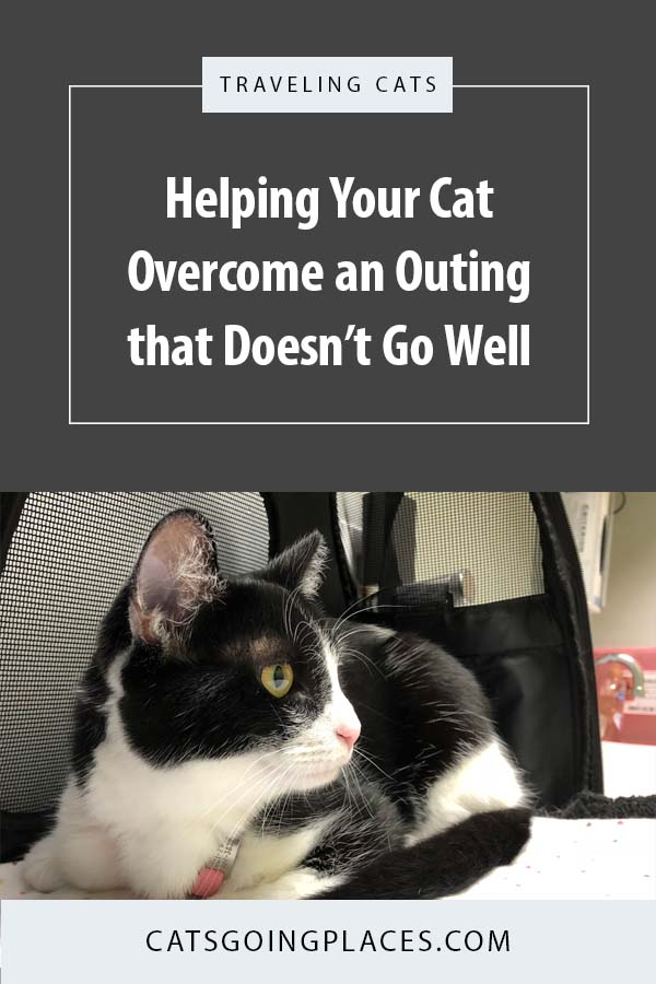 If your cat has an outing that goes poorly, it can make her cautious about future adventures. Here's how we helped Cupcake overcome some difficult experiences. #catonaleash #travelingcats #adventurecats