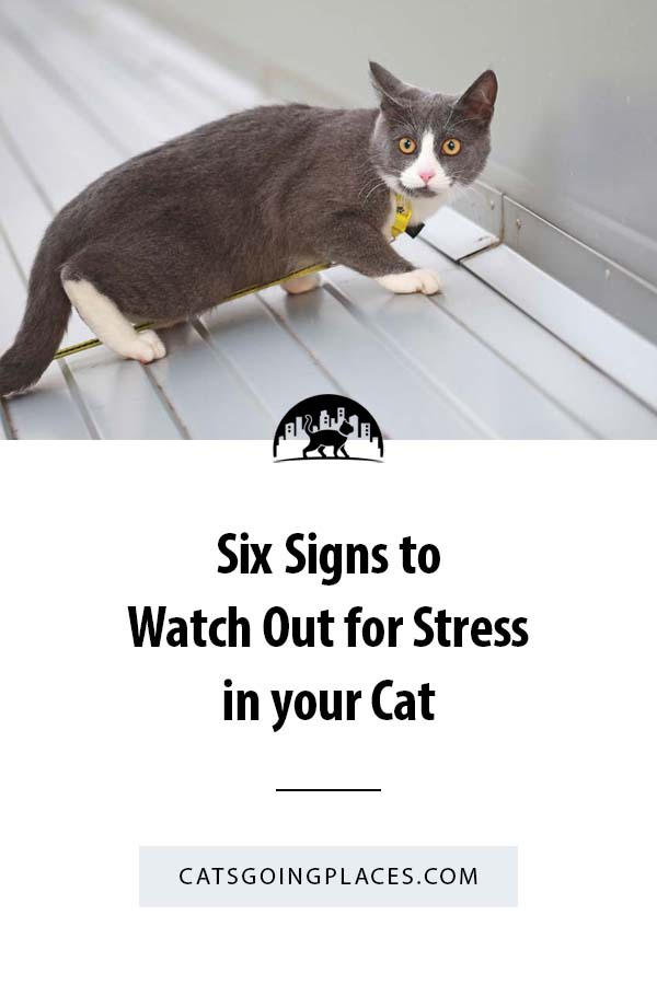 Six Signs to Watch Out for Stress in your Cat #travelingcats #cathealth #cats #stress