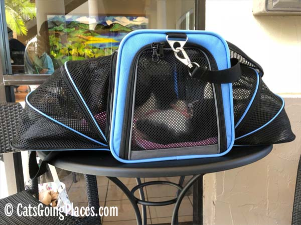 black and white tuxedo cat lounges in expanded Jackson Galaxy Extendable pet carrier