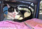 cat dozes in Jackson Galaxy Extendable Pet Carrier