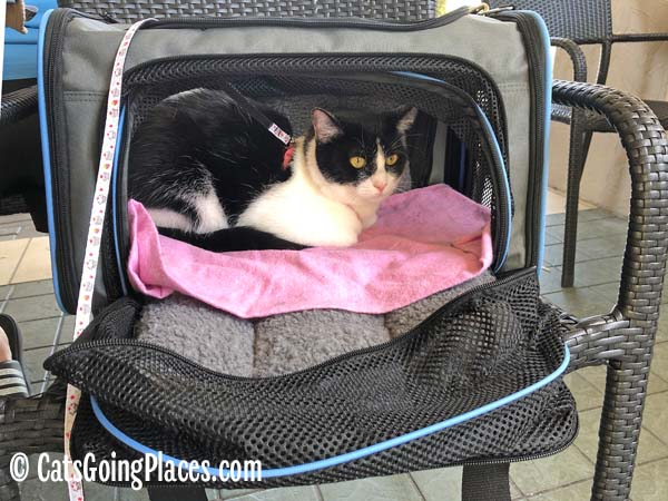 black and white tuxedo cat in jackson galaxy extendable pet carrier