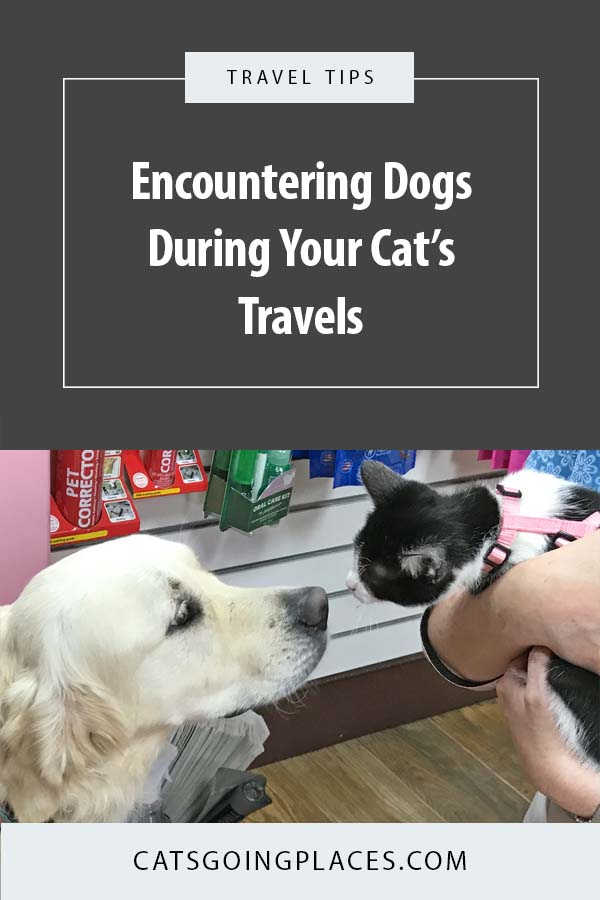 Tips for keeping your traveling cat's encounters with dogs safe and positive #cattravel #catsgoingplaces #cat #dog