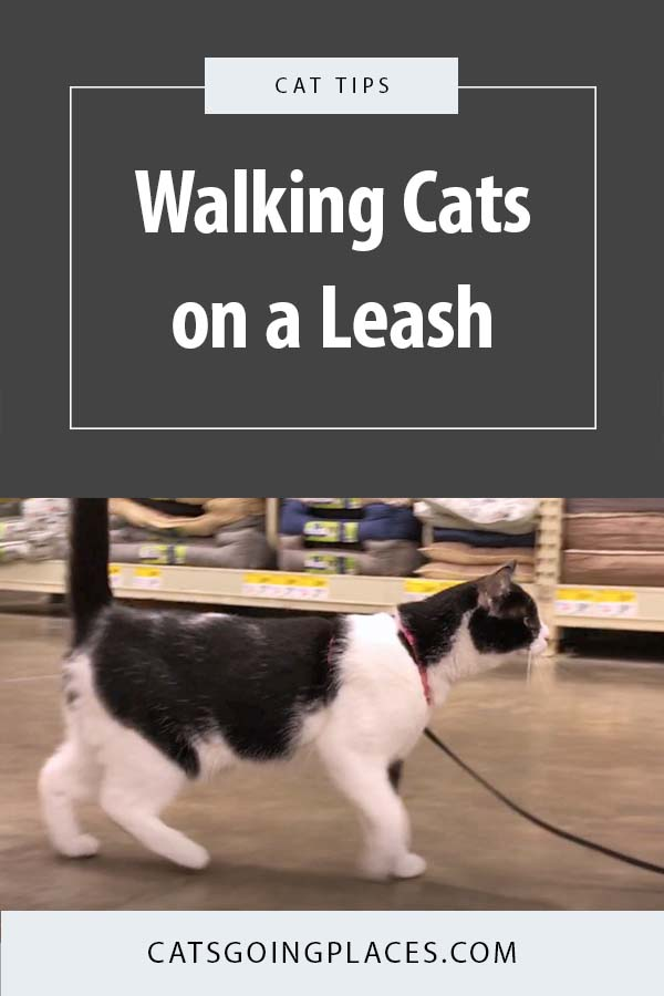 Getting started teaching your cat to walk on a leash is easy once she is comfortable with a harness. #cat #catonaleash #travelingcat