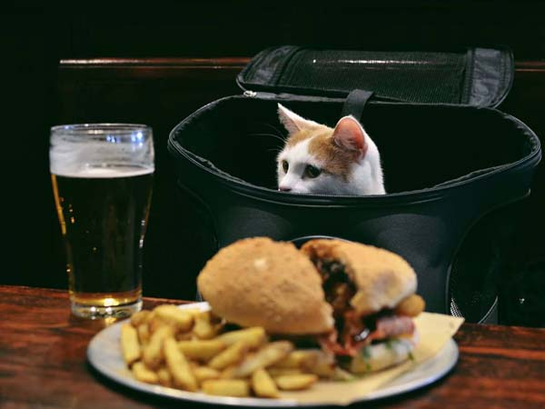 orange and white cat in pub. Photo credit catexplorer.com.