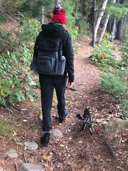 tabby cat hikes alongside human