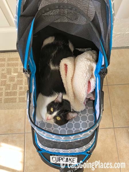 black and white tuxedo cat in stroller beside wadded-up blanket