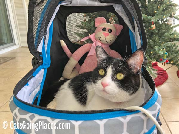 black and white tuxedo cat in stroller with sock monkey/cat