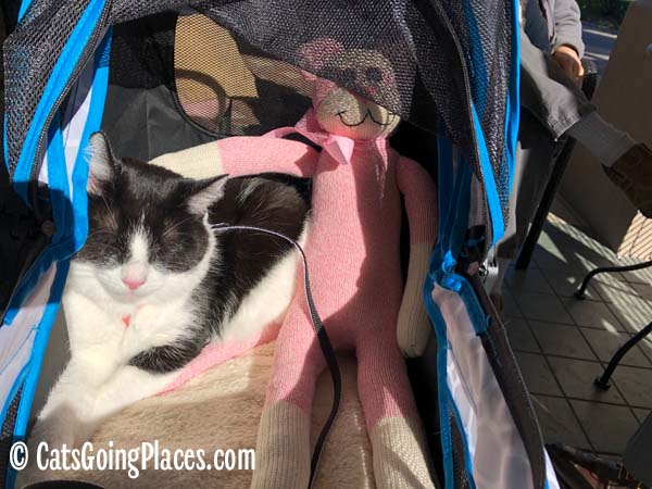 black and white tuxedo cat lounges with sock monkey/cat in stroller